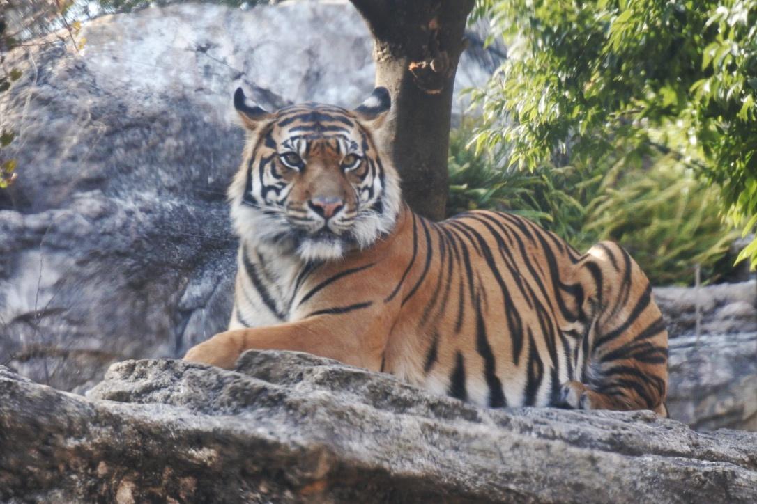 『上野動物園』が小学生まで無料って知ってた?週末レジャーにオススメです!