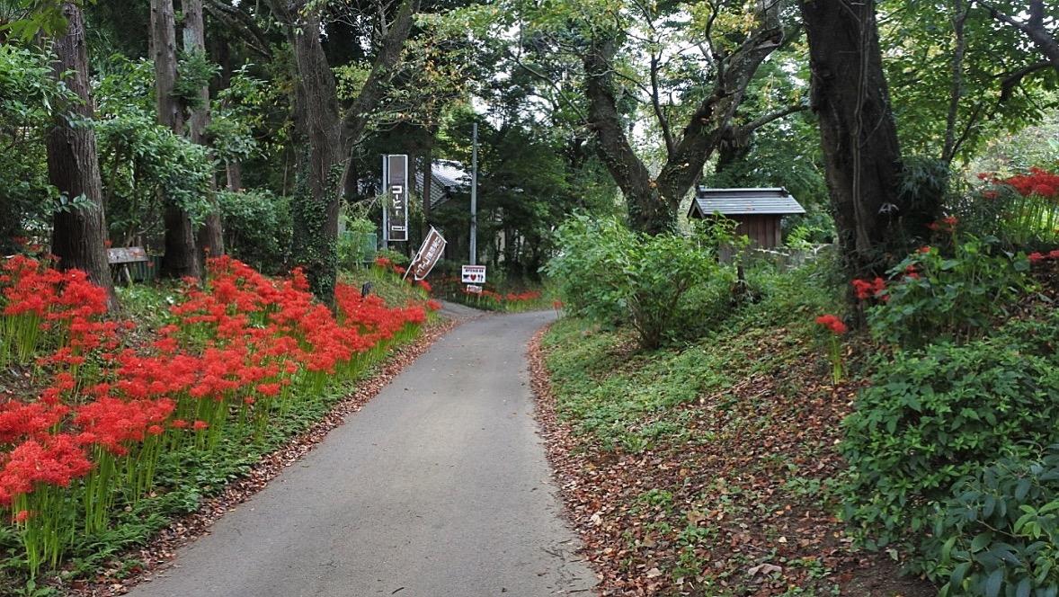 『ガーデンカフェマツムシコーヒー』(印旛日本医大)。松虫寺に隣接する里山カフェ。