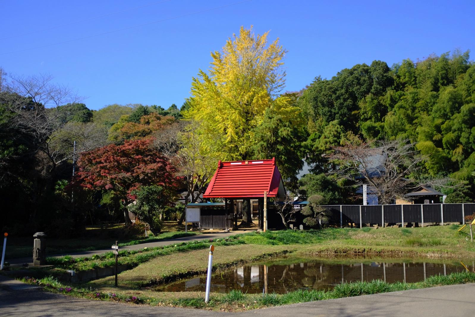 【結縁寺の紅葉/2017年】里山ウォーキングの立ち寄り地にどうぞ!