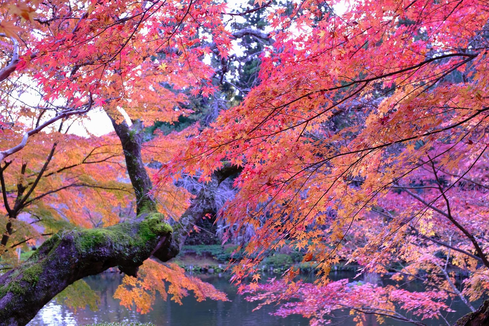 成田山公園の紅葉が綺麗でした。但し混雑するので早い時間がおすすめです。