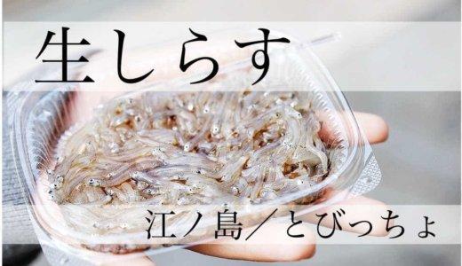 """【とびっちょ/江ノ島】新鮮な""""生しらす""""が美味い!プリプリ、プチッとした感触が最高。"""