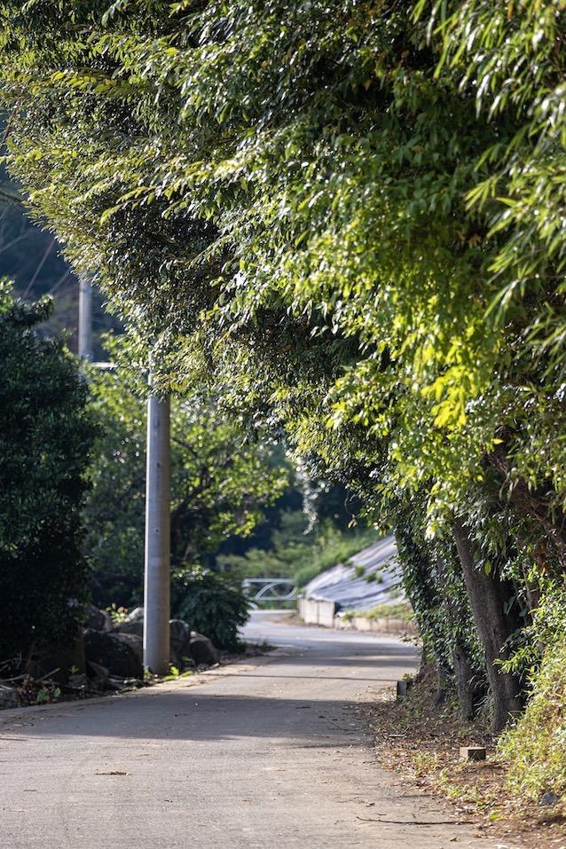 結縁寺と秋