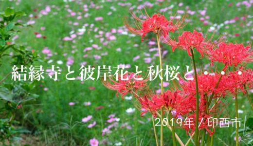 結縁寺と彼岸花とコスモスと・・・【2019年/印西市】