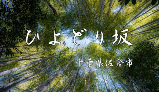 【ひよどり坂/佐倉】竹林の小径が、千葉で注目のフォトスポットに!