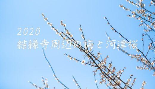 【2020年/印西市】結縁寺周辺の梅と河津桜・・・