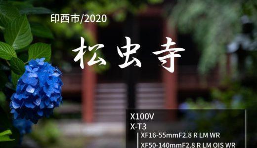 【松虫寺/印西市】静寂の中、小雨に濡れる、紫陽花(あじさい)の花