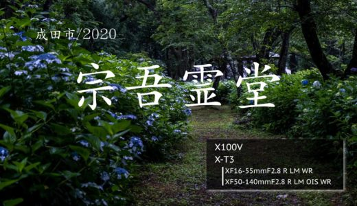 【宗吾霊堂/成田市】7000株の紫陽花(あじさい)を雨の日に。
