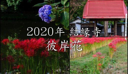 2020年「結縁寺」の秋、彼岸花と秋桜と紫陽花と