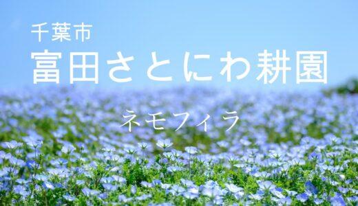 『富田さとにわ耕園(千葉市)』でネモフィラ鑑賞|2021/4/30