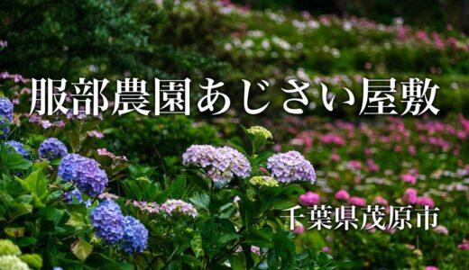 服部農園あじさい屋敷|これは絶景!山の斜面に広がる紫陽花